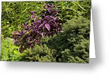 Garden Color At Woodward Park 8f Greeting Card
