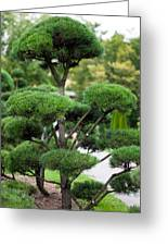Garden Landscape - Topiary Greeting Card