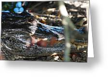 Gator In The Shade Greeting Card