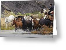 Gaucho With Herd Of Horses Greeting Card