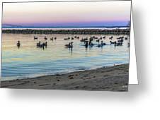 Geese At Dusk Greeting Card