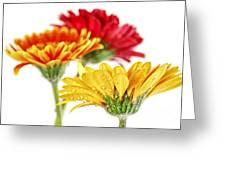 Gerbera Flowers Greeting Card