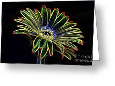 Gerbera Glow 1 Greeting Card
