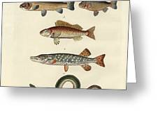 German Sea Fish Greeting Card