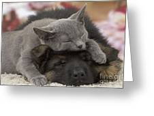 German Shepherd And Chartreux Kitten Greeting Card