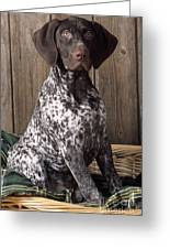 German Short-haired Pointer Dog Greeting Card