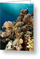 Giant Clam And Tropical Reef In The Red Sea. Greeting Card