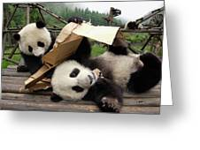 Giant Panda Ailuropoda Melanoleuca Pair Greeting Card