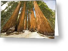 Giant Sequoias Sequoia N P Greeting Card by Yva Momatiuk John Eastcott