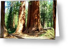 Giant Sequoias Greeting Card