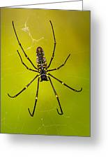 Giant Wood Orb Spider Greeting Card