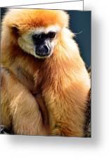 Gibbon Monkey  Greeting Card
