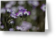 Gilia Tricolor Greeting Card