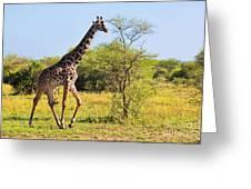 Giraffe On Savanna. Safari In Serengeti Greeting Card