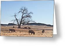 Give Me A Home Where The Buffalo Roam Greeting Card