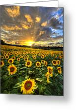 Golden Evening Greeting Card by Debra and Dave Vanderlaan