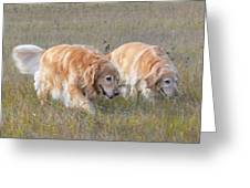 Golden Retriever Dogs On The Hunt Greeting Card