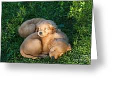 Golden Retriever Puppies Sleeping Greeting Card by Linda Freshwaters Arndt