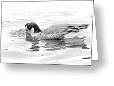 Goose In The Water Greeting Card