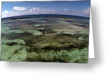 Grand Bahama Island Greeting Card
