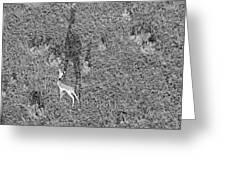 Grants Gazelle Greeting Card