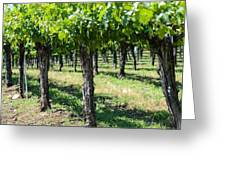 Grape Vines In A Row Greeting Card