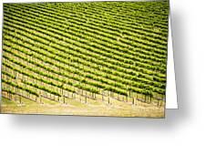 Grape Vines Greeting Card
