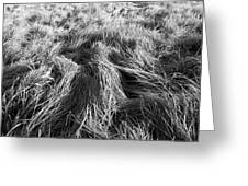 Grass In Black And White Greeting Card