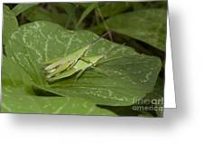 Grasshopper Mating On Grass Leaf Greeting Card