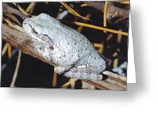 Gray Treefrog Greeting Card