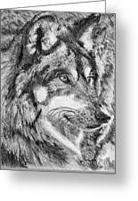 Gray Wolf Watches And Waits Greeting Card