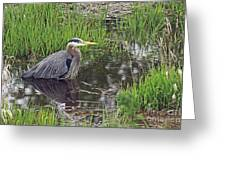 Great Blue Heron At Deboville Slough 2 Greeting Card