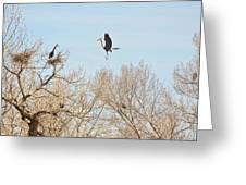 Great Blue Heron Nest Building 3 Greeting Card
