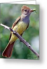 Great Crested Flycatcher With Captured Greeting Card