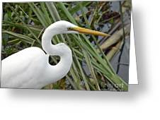 Great Egret Close Up Greeting Card