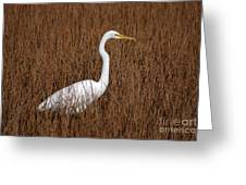 1- Great Egret Greeting Card