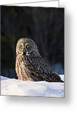Great Gray Owl Pictures 789 Greeting Card