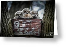 Great Horned Owl Chicks Greeting Card