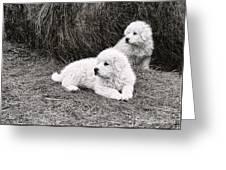 Great Pyramise Pups Greeting Card