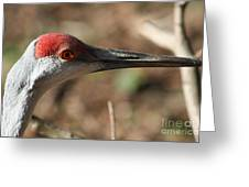 Greater Sandhill Crane Greeting Card