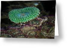 Green Anemone Greeting Card
