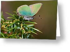 Green Hairstreak Greeting Card