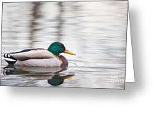 Green-headed Duck Greeting Card