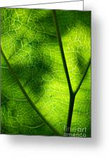 Green Leaf Greeting Card