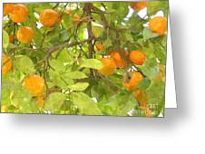 Green Leaves And Mature Oranges On The Tree Greeting Card