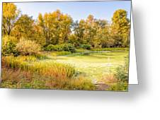 Green Pond And Tree Greeting Card