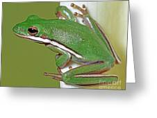 Green Treefrog Greeting Card