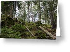 Green Untouched Forest Greeting Card