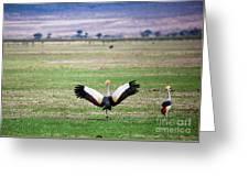 Grey Crowned Crane. The National Bird Of Uganda Greeting Card