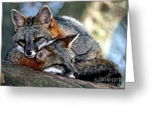Grey Foxes Greeting Card